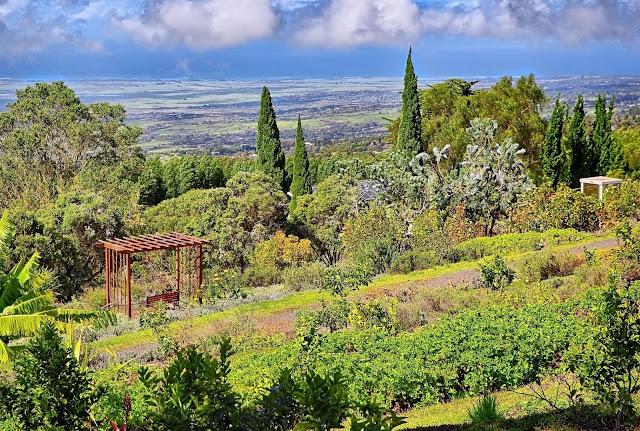 Ali'i Kula Lavender view