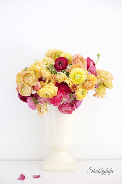 ranunculus in a vintage white pot