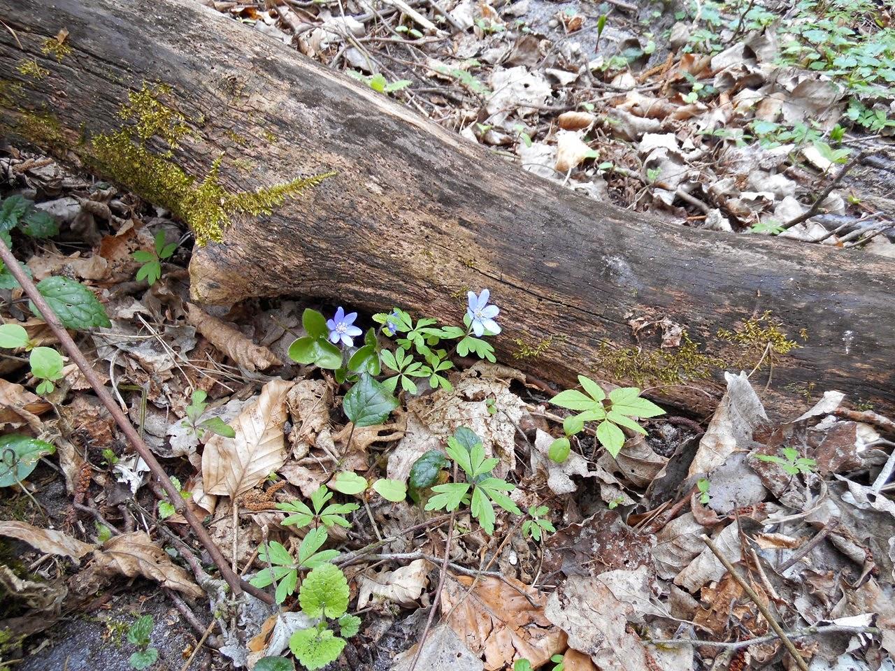 Morasko, ściółka, las, mchy