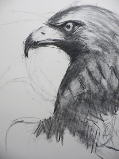 charcoal drawing of Hawk