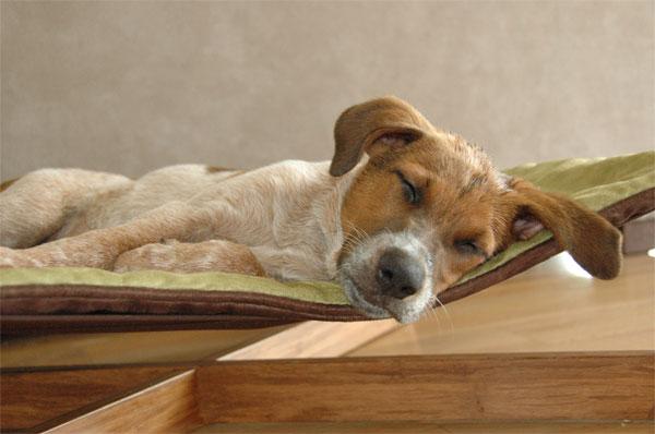Pet Friendly Bed And Breakfast Millersburg Oh