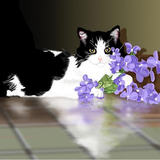 Cherokee Cat Portrait