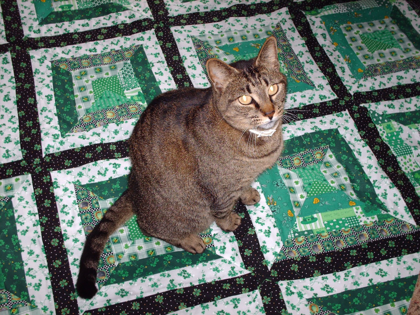 photo regarding Free Printable Cat Quilt Patterns known as Michele Bilyeu Generates *With Centre and Palms*: No cost St