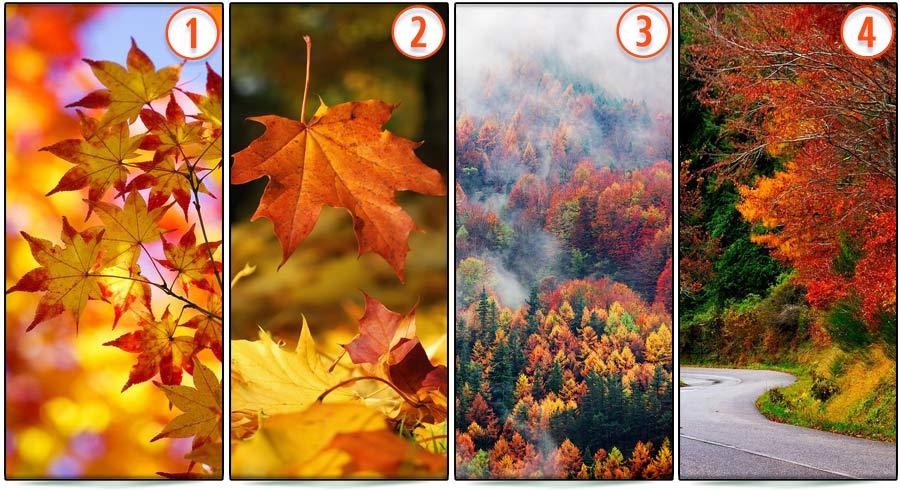 Test: ¿Cuál es tu color favorito de las hojas  de otoño?