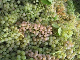 Soave is produced using the Garganega grape