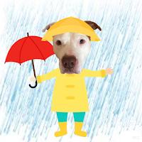 Lgar Dog Rescue