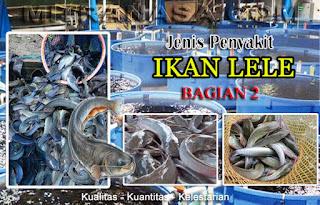 AGEN NASA DI Pulau Banyak Barat Aceh Singkil - TELF 082334020868