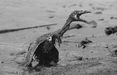 Vazamento de Petróleo, Poluição, Extinção de Animais, Sustentabilidade