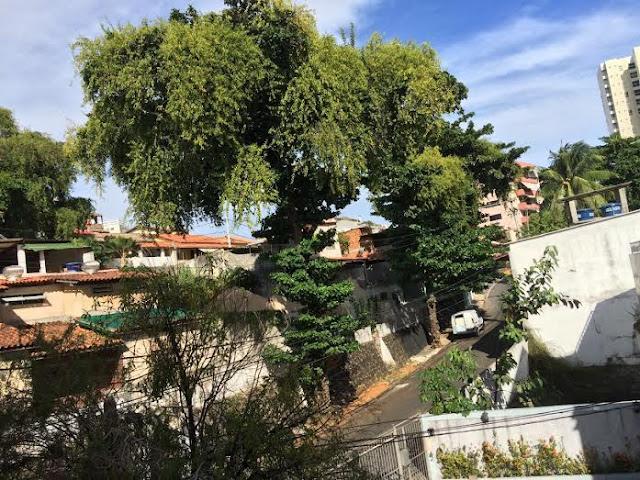 Poda de árvore da rua Maracás é de responsabilidade da Coelba