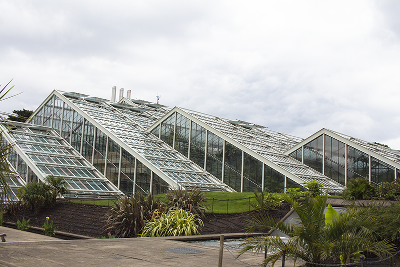 Princess of Wales Conservatory, cactus, succulent, park, gardens, attractions, seasonal, Museums and galleries, viewpoint, flowers, grass,