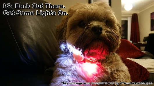 Tizer the Lhasa Apso: It's Getting Dark Again!