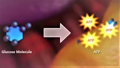 pembentukan energi mitokondria