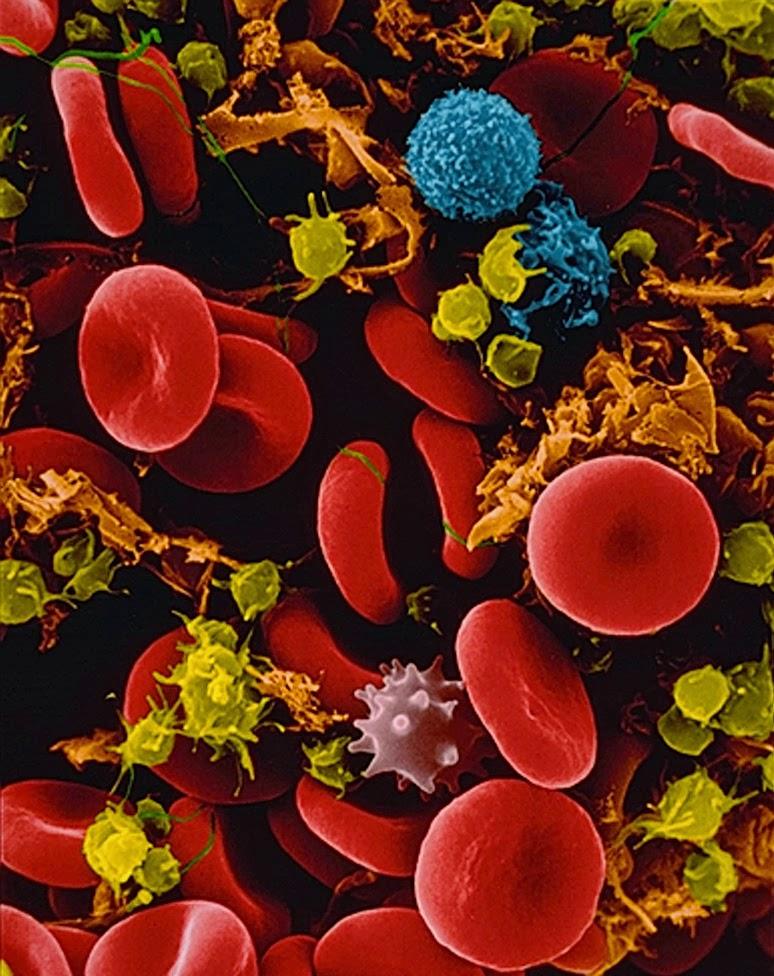 phta 00001874 001 - مكونات الدم : بحث  ايقاظ متكامل لتلاميذ السنة السادسة من التعليم الاساسي