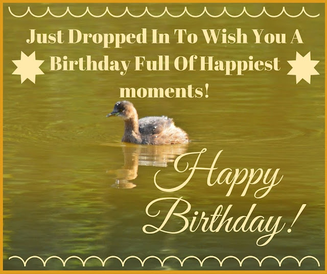 Happy Birthday Card, Just Dropped, Wish, Birthday, Happiest, moment, Little Grebe,