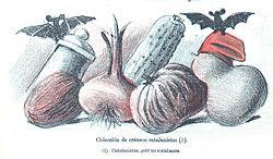 Caricatura de la revista Don Quijote en la que se satiriza la obsesión por las formas craneanas de los racistas catalanistas.