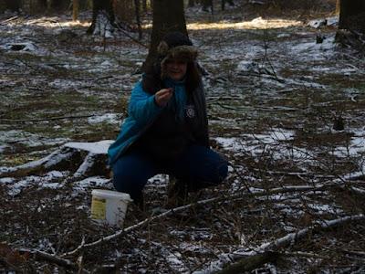 grzyby 2016, grzyby w grudniu, jakie grzyby można zbierać w zimie, grzyby pod śniegiem, zimowe grzybobranie, pieprznik trąbkowy Cantharellus tubeaformis, podgrzybek brunatny Boletus badius, lakówka ametystowa Laccaria amethistina