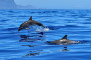 dolphins, dolphins and Alzheimer's Disease