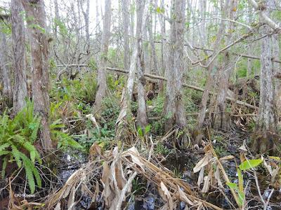 wild south Florida