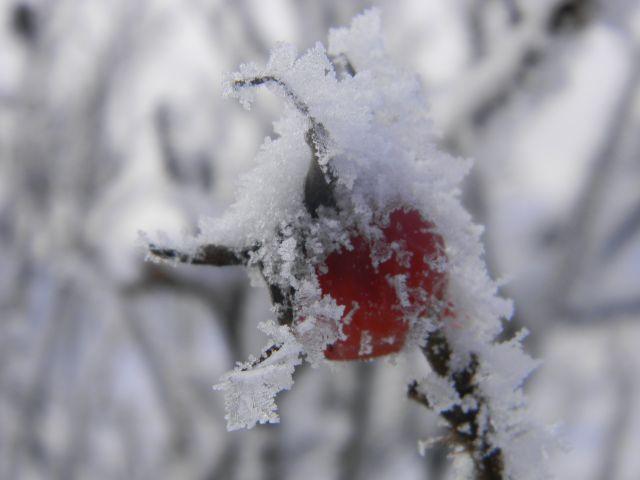 szadź, szron, krzew, zima