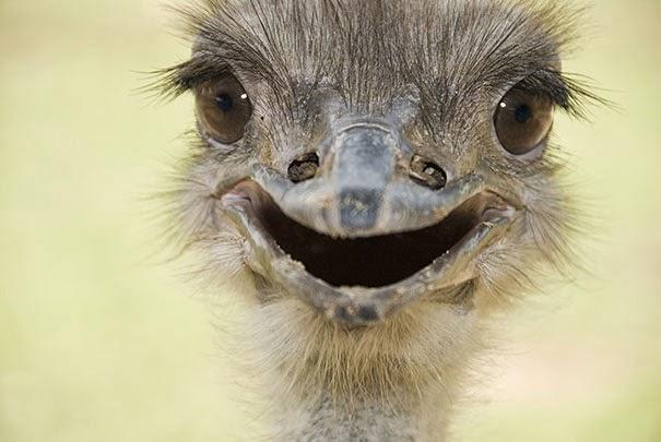 happiest bird