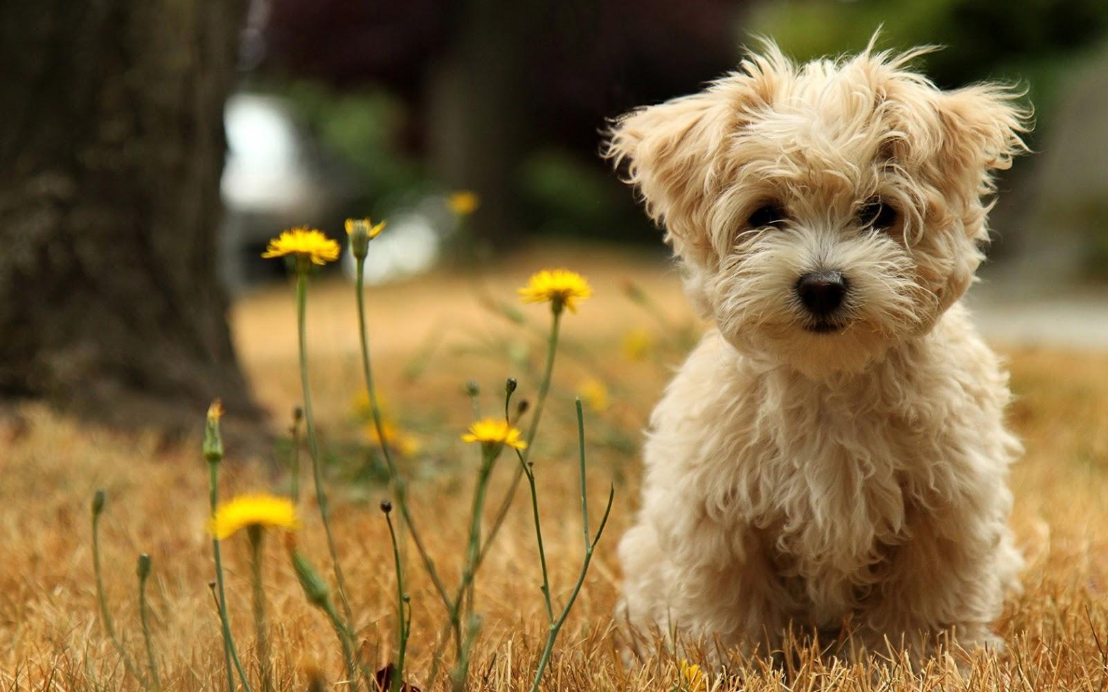 Cute Puppies HD Wallpapers – wallpaper202