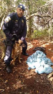 Guarda Civil Metropolitana equipes do canil, ambiental leste e Polícia Civil equipe DHPP,  GARRA localizam drogas e cemitério clandestino na favela do Heliópolis