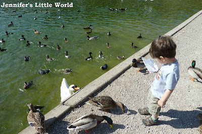 Feeding ducks at Swanbourne Lake