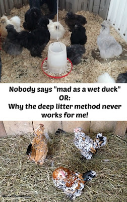 Deep litter method | ducks