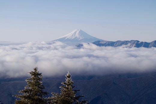 雲取山から見た雲海上に浮かぶ富士山。今年初の雲海だそう