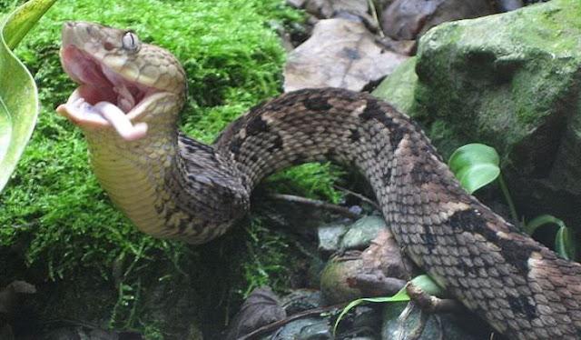 Ilha das Serpentes, Brasil