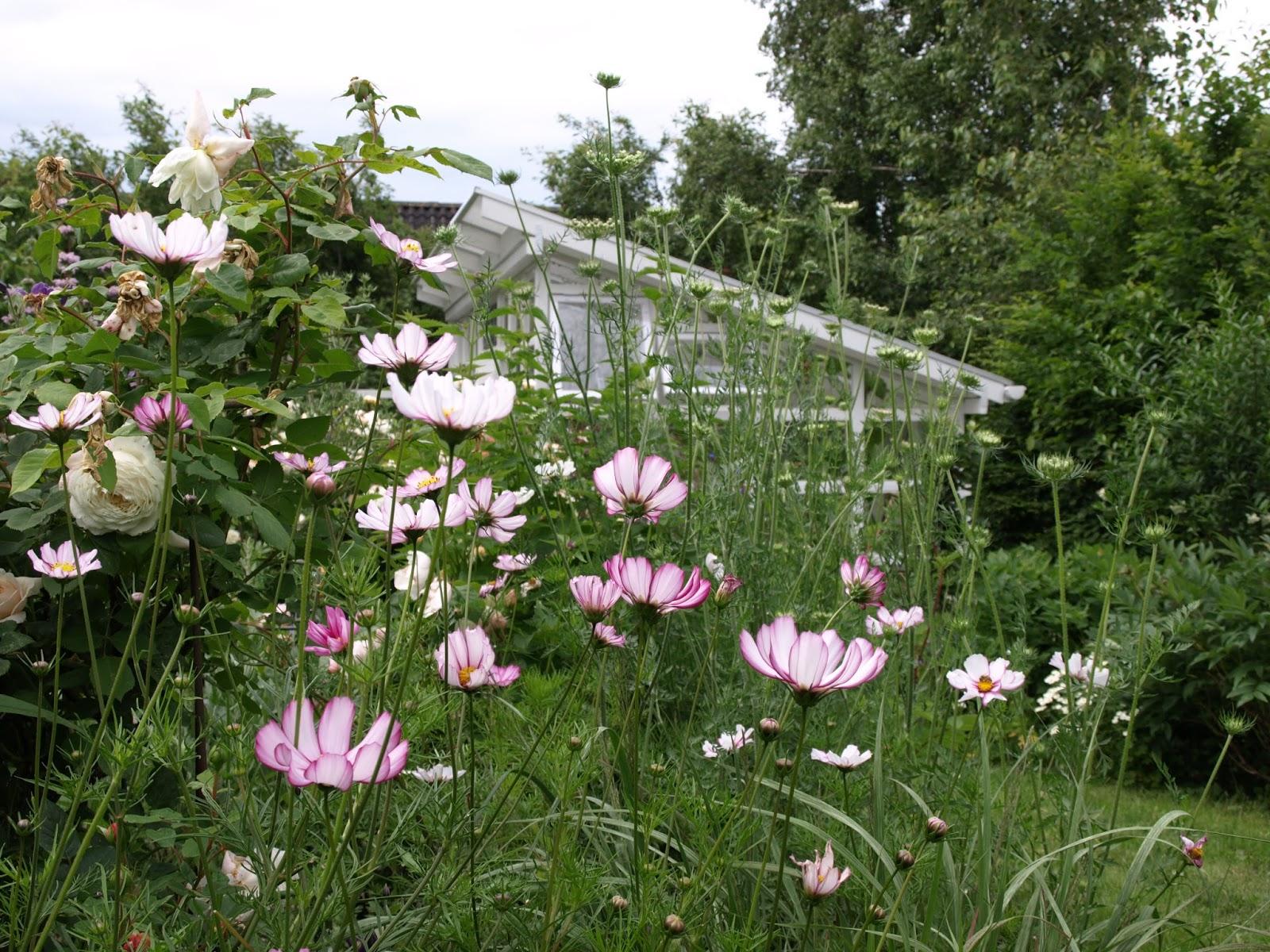 Trädgård i torslanda: min favoritrabatt just nu   sista juli