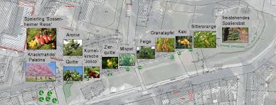 Plan of Andernach vegetable planting