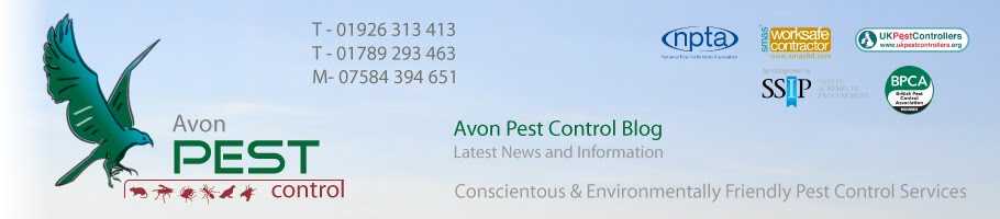 Avon Pest Control Blog
