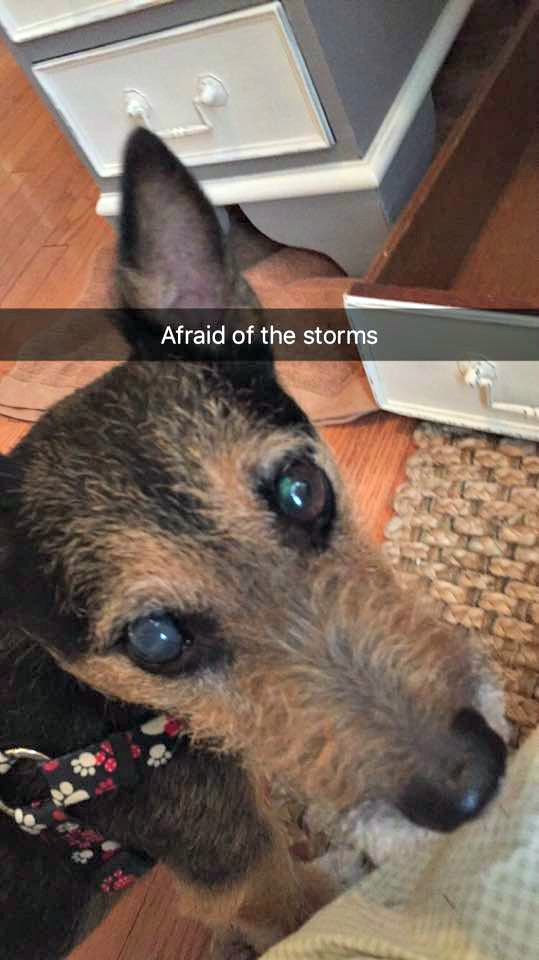 Dog afraid of storms
