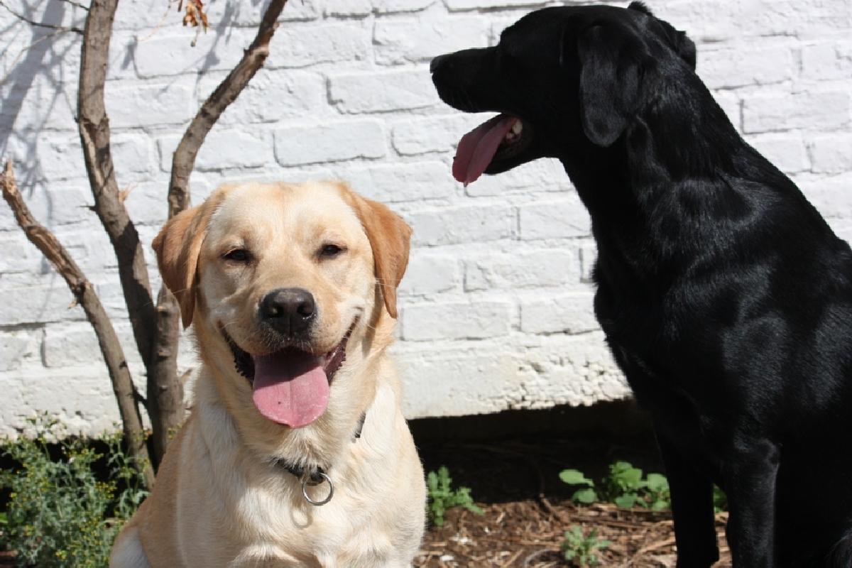 hulp hond nederland
