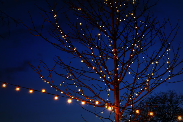 tree with Christmas lights