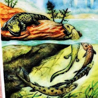 Evolução de peixe para anfíbio - Museu Municipal de Candelária