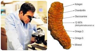 Image result for khasiat teripang emas menurut para ahli