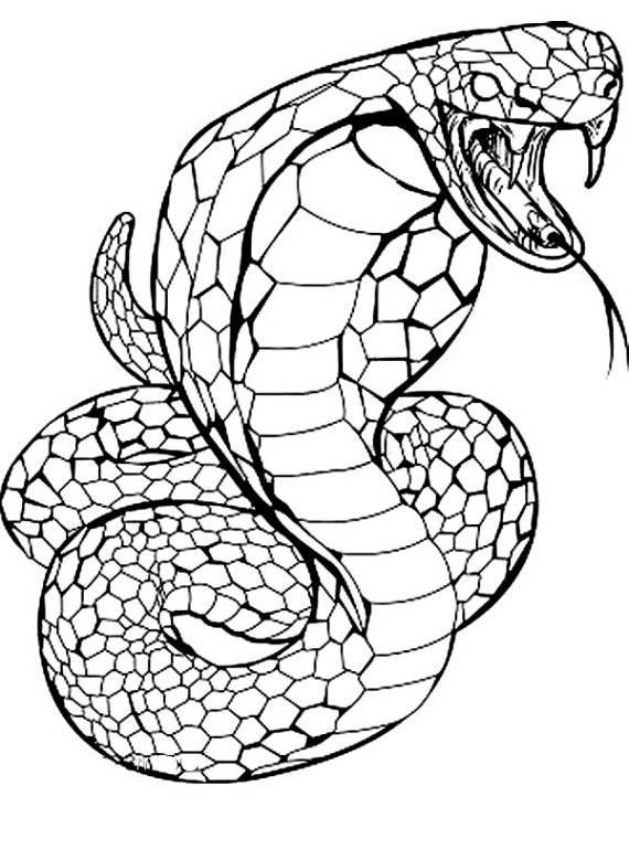 serpente, veleno, cobra,