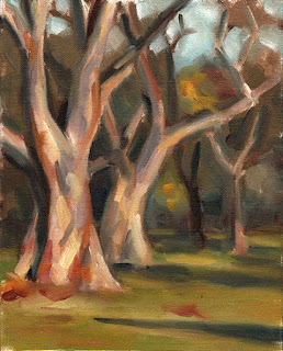 Oil painting of several gum trees, large and small, with long afternoon shadows.