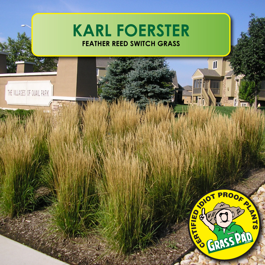 The Grass Rhizome Ornamental Grasses Idiot Proof Landscaping