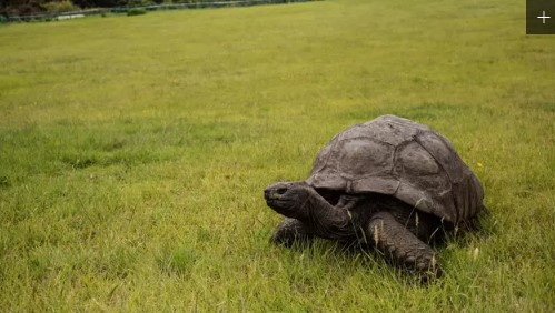 https://ratupelangi-net.blogspot.com/2018/10/5-hewan-dengan-usia-paling-tua-di-dunia.html
