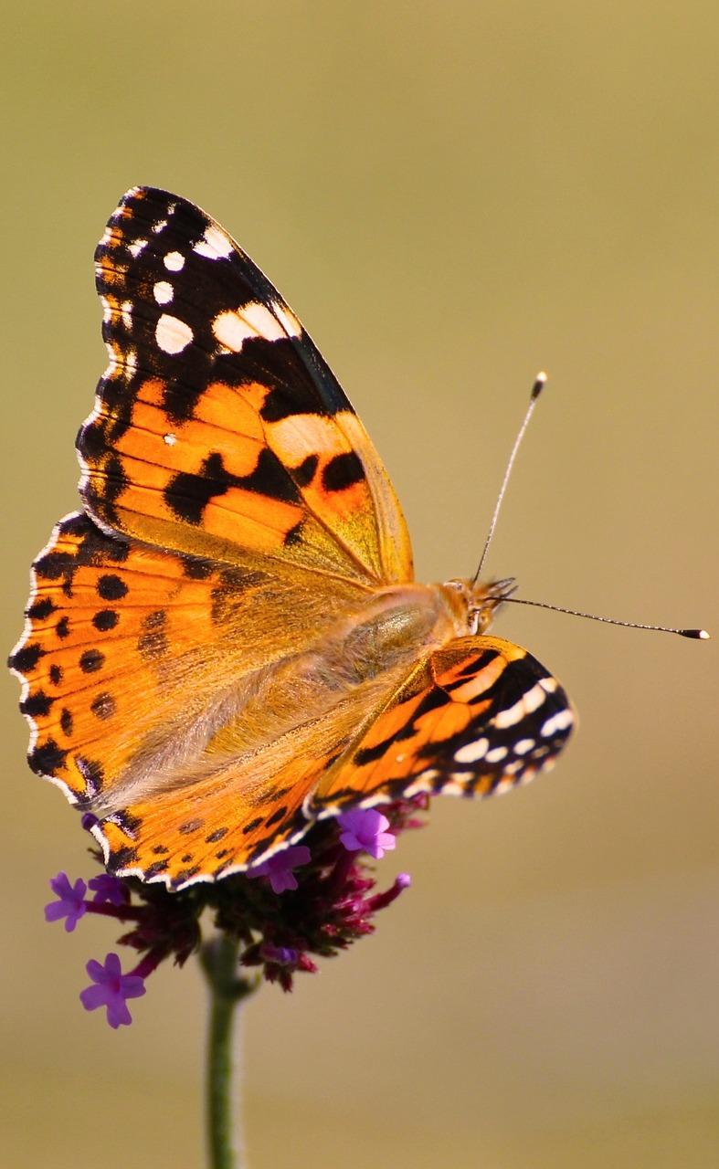 Beautiful butterfly on a flower.