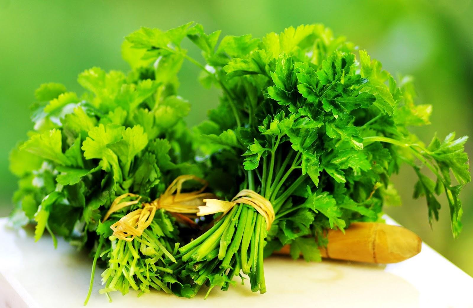 Kết quả hình ảnh cho trị mụn Lá rau mùi
