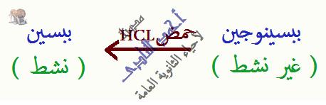 الإنزيمات - غير نشطة - الببسينوجين - حمض - hcl -  مدونة أحمد النادى- أحياء الثانوية العامة