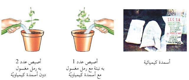 حاجة النباتات إلى الغذاء