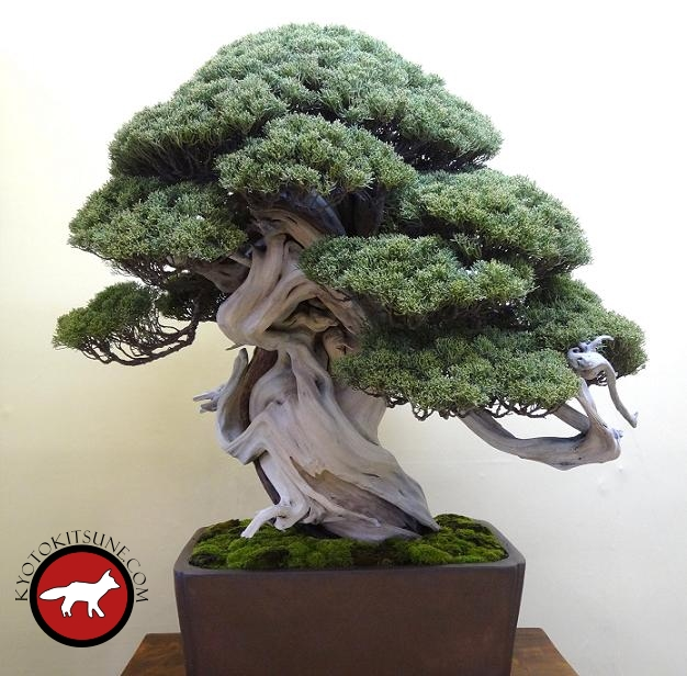Bonsai de Kyoto
