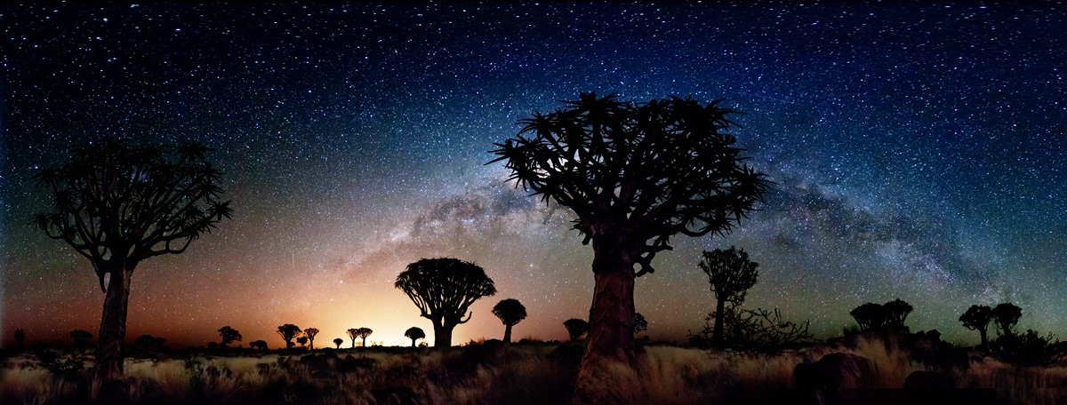 Milky Way Quiver Tree Forest