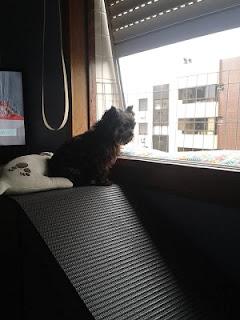 cães na sacada