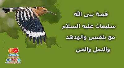 قصة نبى الله سليمان عليه السلام The prophet Suleiman